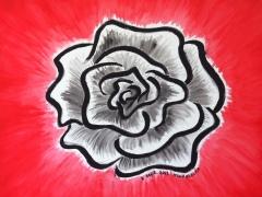 Rose / September 2013