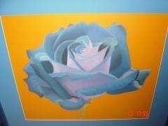 Rose / May 2004