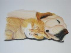 Cat & dog / June 2006