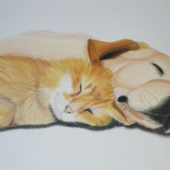 Cat & dog | June 2006