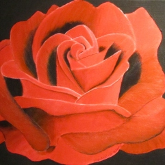 Rose | October 2012