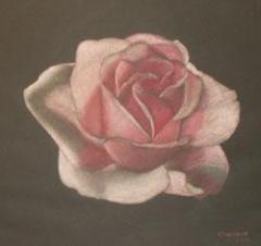 Rose / 2005