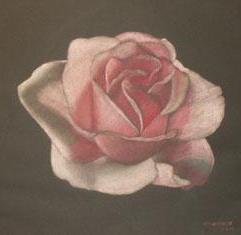 Rose | 2005