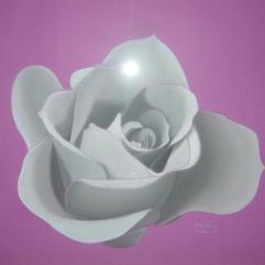 Rose | May 2005